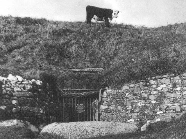 Newgrange-cow-1024x769.jpg